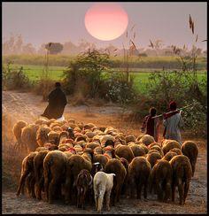 PAKISTAN, Awesome beauty wonderful Shepherd beauty early morning view photography of rural Punjab, Pakistan