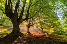 The autumn arrives to the forest Basque Country, John Muir, Bilbao, Morocco, Spain, Places To Visit, Country Roads, Europe, Landscape