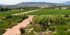 View of Paarl Mountain from Glen Carlou Wine Estate
