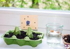 Vorzucht Blumenwichteln im Eierkarton