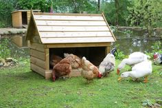 Dust Bath Shelter - Chickens need to dust bath regularly to remove mites. This can be impossible if they are kept on grass or during wet weather. Sunnyfields have designed this Dust Bath Shelter so your chickens can dust bath all year round. Just fill up to the front panel with soil, peat or compost. Comes with ground sheet to keep contents dry. Size: 45 Inches long 32 Inches wide 36 Inches high