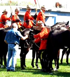 Prince Edward County News, All County, All the time Prince Edward, Musicals, Horses, Board, Animals, Animales, Animaux, Horse, Animal