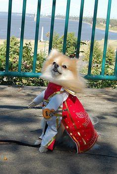Elvis dog! hahaha love it!