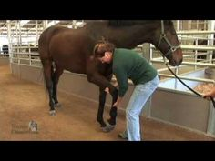 stretches from horse channel    Learn basic stretching exercises you can do with your horse at home.