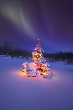 Christmas Tree Glowing Under The Northern Lights