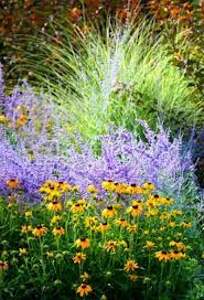 Grasses with Perovskia (purple, Russian Sage) and Rudbeckia (yellow, Black-Eyed Susan)