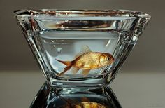Young Sung Kim is a Korean artist, who creates stunningly hyper realistic paintings of animals and fishes. Art Day, Original Paintings, Korean Artist, Painting, Fish Painting, Realistic Art, Canvas Painting, 3d Drawings, Realistic Paintings