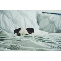 Jack Russell Lovin' - Lurker ~ Princess, there is no other ~
