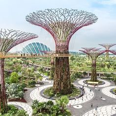 """Instagram photo by natgeo - Singapore Supertrees  on Visions of Earth this month. Photo by Luca Locatelli / Institute @lucalocatelli.ig  Man-made """"super- trees""""—vertical gardens ranging in height from 82 to 164 feet—stretch skyward in Gardens by the Bay. The three-year- old, 250-acre eco-tourism site promotes clean air, solar energy, sustainable practices, and botanical diversity.  TheSupertrees were built in tandem with the whole development of Gardens by the Bay. Constructed started in…"""
