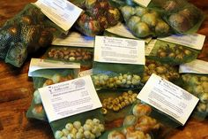 FORCING BULBS Garden Bulbs, Planting Bulbs, Easy To Grow Bulbs, Kevin Lee, Pink Cups, Fall Plants, Take The Cake, Spring Colors, Daffodils