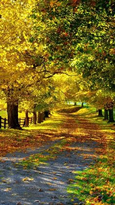 autumn The post autumn autumn scenery appeared first on Trendy. Fall Pictures, Nature Pictures, Beautiful Places, Beautiful Pictures, Beautiful Roads, Autumn Scenery, Belle Photo, Pathways, Amazing Nature
