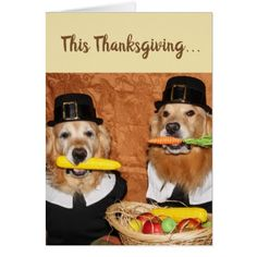 Create your own unique greeting on a Golden Retriever card from Zazzle. From birthday, thank you, or funny cards, discover endless possibilities for the perfect card! Thanksgiving Greeting Cards, Happy Thanksgiving Day, Holiday Cards, Christmas Cards, Holiday Decor, Family Holiday, Pilgrim, Photo Cards, Dogs