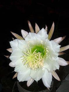 182 Mejores Imagenes De Maravillosas Flores All Flowers Beautiful