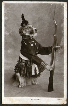 Scottish Collie Dog Stands To Attention. Posted 1906.