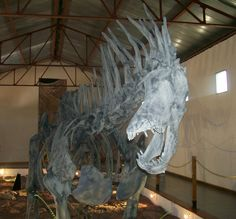 Amargasauruscazaui.JPG (1754×1632) - Salgado et Bonaparte, 1991. Barrémien, Crétacé supérieur de l'Amérique du Sud. Dinosauria, Saurischia, Eusaurischia, Sauropodomorpha, Sauropoda, Eusauropoda, Neosauropoda, Diplodocoidea, Dicraeosauridae. Auteur : Aleposta, 2009.