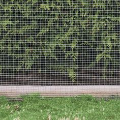1000 Images About Chain Fence Cover Ideas On Pinterest
