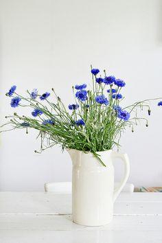 summer flowers cornflowers in a white pitcher by Ingrid Jansen