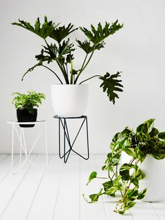 Wire plant stands from local start up IVY MUSE. Styling - Alana Langan, photo – Annette O'Brien on thedesignfiles.net