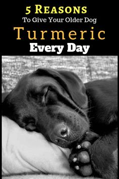 5 Reasons To Give Your Older Dog Turmeric Every Day. Turmeric For Dogs. turmeric for dogs cancer Weimaraner, Dog Care Tips, Pet Care, Cute Puppies, Dogs And Puppies, Dog Health Tips, Pet Health, Dog Nutrition, Pets