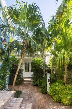 Green thatch palms provide shade, their silhouettes echoed by the understory, where the low, bushy shrub Osmoxylon lineare adds texture. Tropical Backyard, Tropical Landscaping, Modern Landscaping, Front Yard Landscaping, Key West Cottage, Key West House, Key West Decor, Laura Lee, Landscape Design
