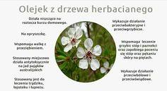 Plants, Aromatherapy, Plant, Planets