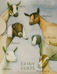 Types of Dairy Goats -  we have alpine and nubian. my fave is nubians b/c of their sweetness <3