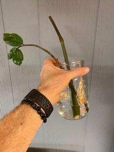 zz-plant-stem-propagation-water Easy Plants To Grow, Cool Plants, Zz Plant Care, Low Light Plants, Plant Stem, Lower Lights, Perfect Plants, Plant Needs, Potting Soil