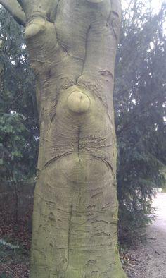 Grumpy tree in a park