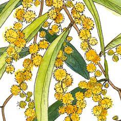 Australian Wattle Flower, Illustration Coffee Mug by Jessica Rose - 11 oz Australian Native Flowers, Jessica Rose, Coffee Mugs, Doodles, Paintings, Illustration, Prints, Artwork, Artist