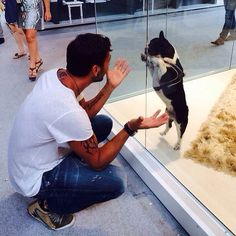 #CostantinoVitagliano Costantino Vitagliano: Buongiorno.... #amore #tac #bulldogfrancese #frenchbulldog #frenchie #dog #puppy #love #bestfriend #goodmorning