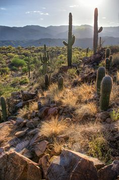Saguaro Hillside by Michael Wilson on 500px; Arizona