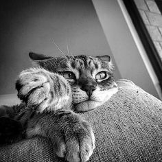 KING COLLIN'S CAT PALACE: has members. This group is for anything about cats. All cat lovers are welcome. Silly Cats, Cute Kittens, Cats And Kittens, Tabby Cats, Funny Cats, I Love Cats, Crazy Cats, Cool Cats, Beautiful Cats