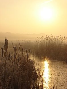Half past dawn. Landscape Photography, Nature Photography, Oeuvre D'art, Beautiful World, Mists, Sunrise, Beautiful Pictures, Scenery, Photos