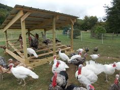 Turkey Roost / Shelter / Coop Help