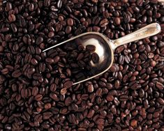 5 Pounds Bali Blue Moon Organic RFA Fresh Medium/Dark Roast Coffee Beans - Ideas of Coffee Bean Fresh Roasted Coffee Beans, Cuba, Low Acid Coffee, Wine Flavors, Bali, Coffee Facts, Great Coffee, Coffee Works, Coffee Ideas