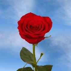 Best Red Roses 50 stems - http://flowersnhoney.com/best-red-roses-50-stems/