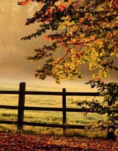 autumn-chronic:    Autumn wow<3