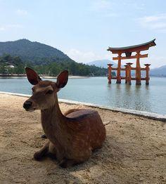 #landscape  #architecture  #nature  #hiroshima  #miyajima  #itsukushimashrine  #sea #sky  #島  #鳥居  #海  #広島 #厳島神社  #空 #自然 #宮島 #大鳥居  #空