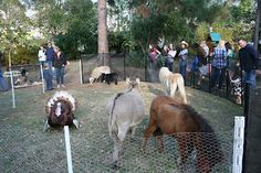 Let's have a petting zoo!! Kidding, I'm kidding.