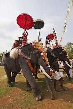 Elephant, Thrissur Pooram festival, Thrissur, Kerala, India, Asia