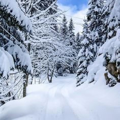 Winter Magic, Winter Snow, Winter Time, Winter Holidays, Winter Season, Wallpaper Pictures, Nature Wallpaper, Winter Photography, Nature Photography