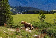Svizzera: 50 luoghi imperdibili da visitare quest'estate - Mini Me Explorer Engelberg, Jungfraujoch, Estate, Mountains, Mini, Nature, Travel, Climbing, Naturaleza