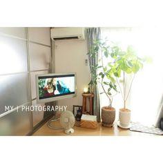 ウンベラータ/家電/テレビ/ディフューザー/扇風機/NO GREEN NO LIFE…などのインテリア実例 - 2015-07-13 21:11:20 | RoomClip(ルームクリップ)