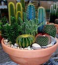 Mini Cactus Arrangement