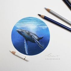 Whale Bubble: 2 I've hit a wall with my work at the moment.. this flu really knocked the motivation out of me. So I've done something very small and sweet. I did one of these at the start of the year and loved it, so I did another. ____ -Watercolour -Faber-Castell polychromos pencils -Micador fixative spray