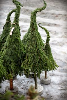 love these hobbit trees!love these hobbit trees! Woodland Christmas, Natural Christmas, Green Christmas, Scandinavian Christmas, Winter Christmas, Christmas Crafts, Christmas Decorations, Xmas, Christmas Ornaments