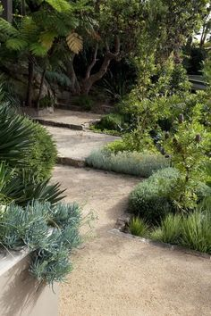 Australian Coastal Style - 7 steps to achieve this look - Ma.- Australian Coastal Style – 7 steps to achieve this look – Making your HOME beautiful - Tropical Landscaping, Garden Design, Australian Native Garden, Landscape Design, Bush Garden, Outdoor Gardens, Dry Garden, Landscape, Australian Garden