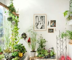 Image result for white walls and plants