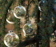 Christmas Garden.