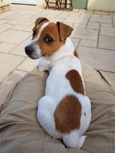 Hunde Welpen Cute Dogs Cute Animals Cute Creatures